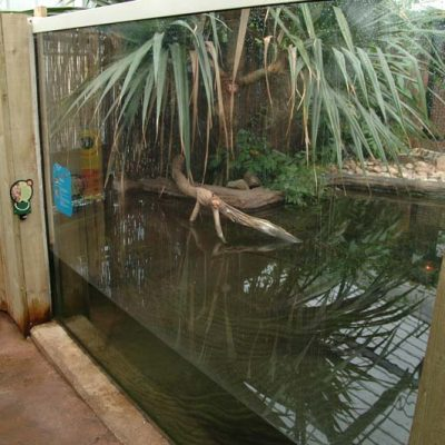 Crocodile swamp security glazing