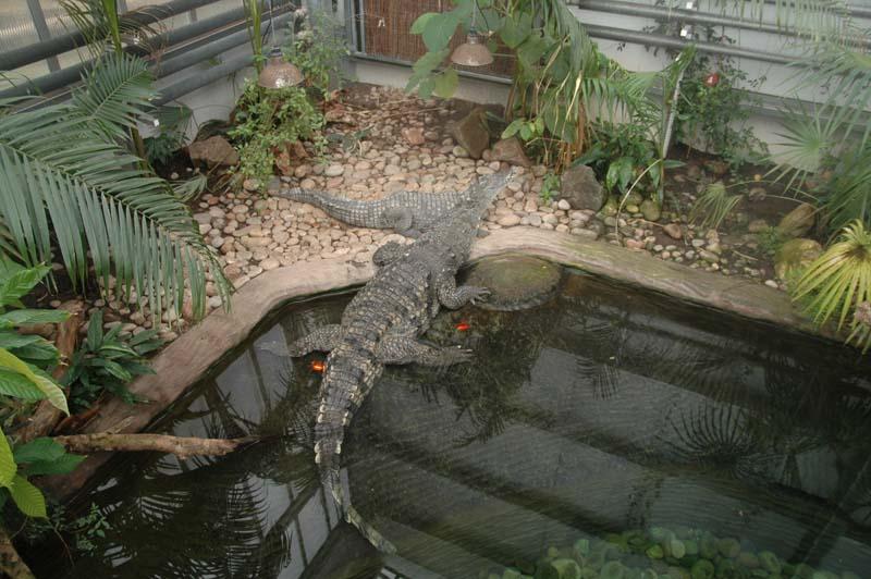 Zoo Displays, modern glass and acrylic glazing, entire displays