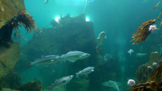 ATL aquarium refurbishment