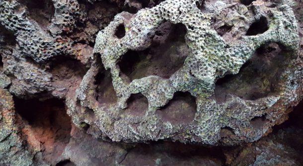 ATL coral rockwork