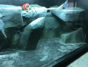 ZSL Whipsnade Zoo aquarium